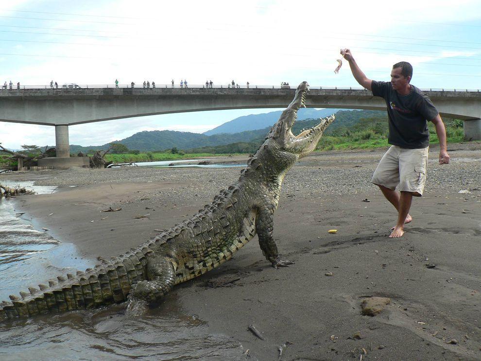 Croco03 Заклинатель крокодилов из Коста Рики