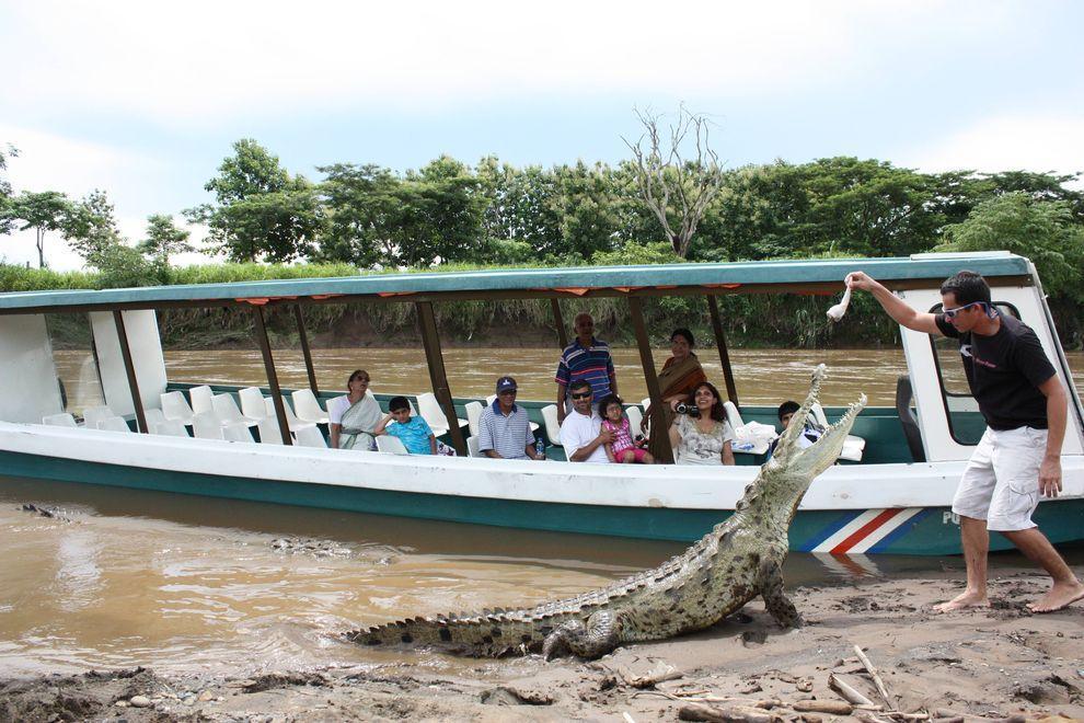 Croco06 Заклинатель крокодилов из Коста Рики