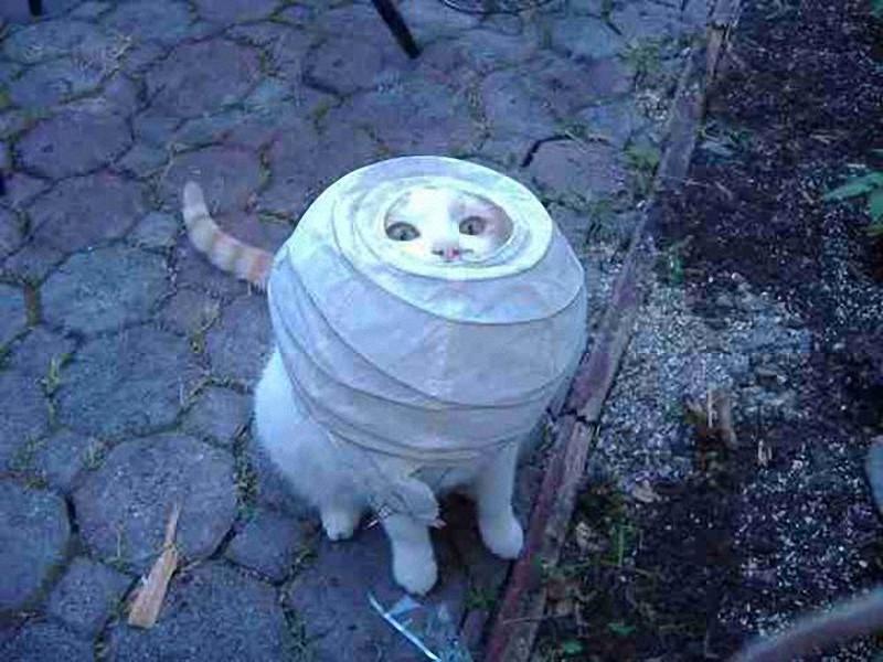 http://bigpicture.ru/wp-content/uploads/2013/10/CuriousCats14.jpg