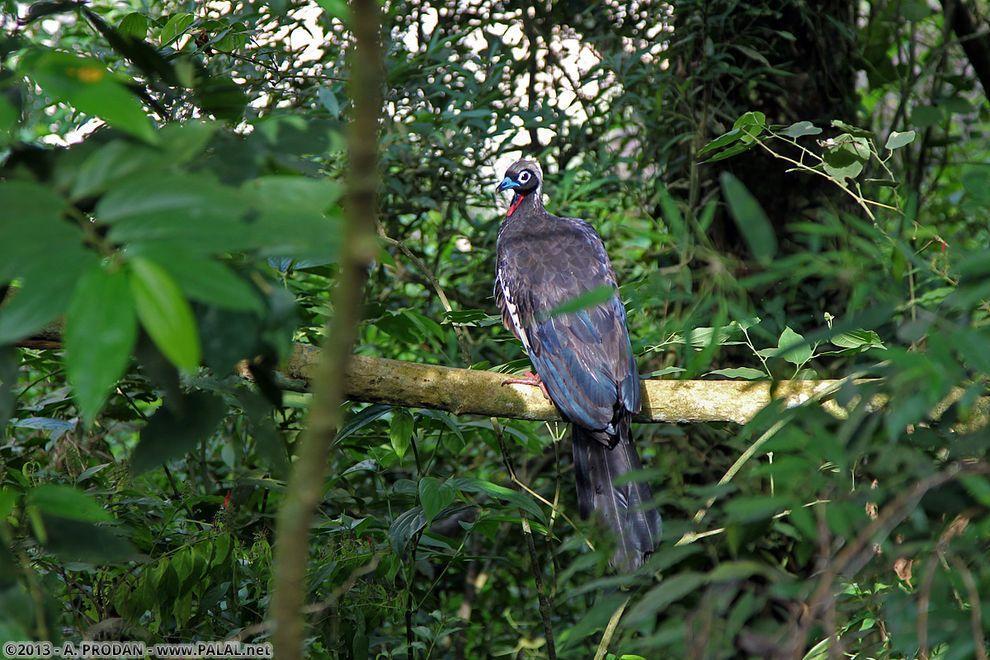 Iguazu24 Водопады Игуасу