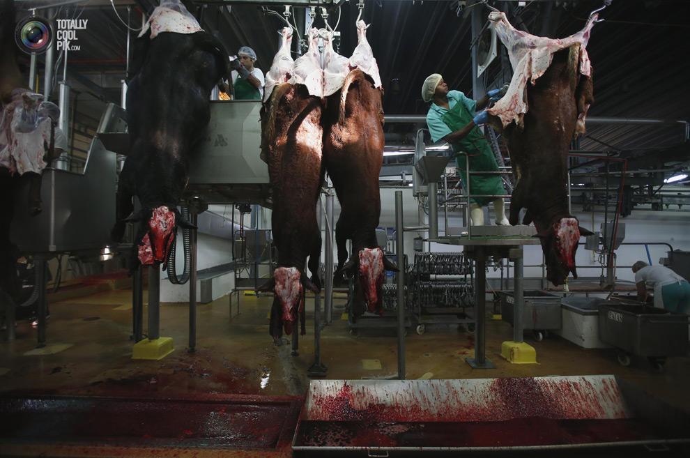 MakeMeat07 Как делают мясо, которое мы едим