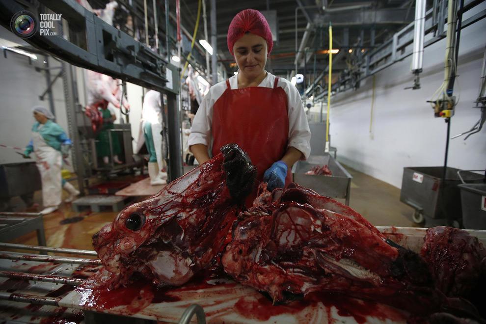 MakeMeat08 Как делают мясо, которое мы едим