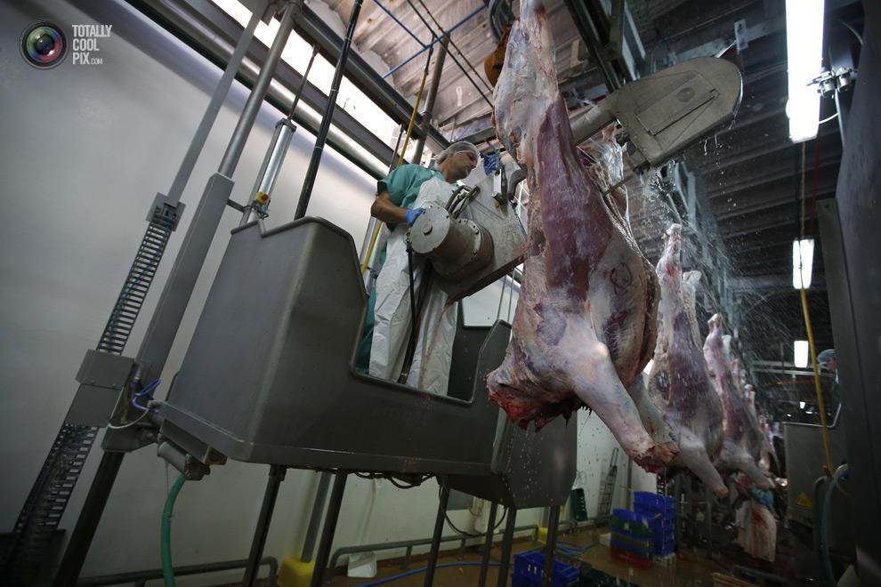 MakeMeat09 Как делают мясо, которое мы едим