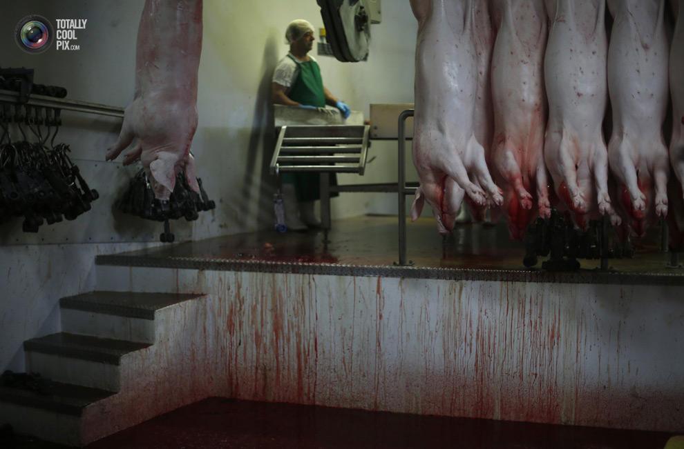 MakeMeat19 Как делают мясо, которое мы едим