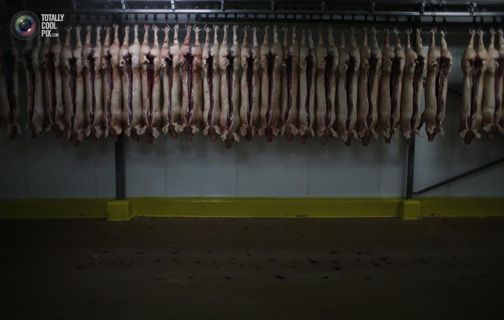 MakeMeat21 Как делают мясо, которое мы едим