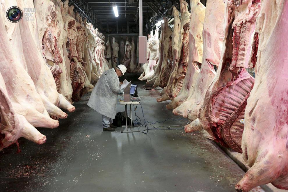 MakeMeat33 Как делают мясо, которое мы едим