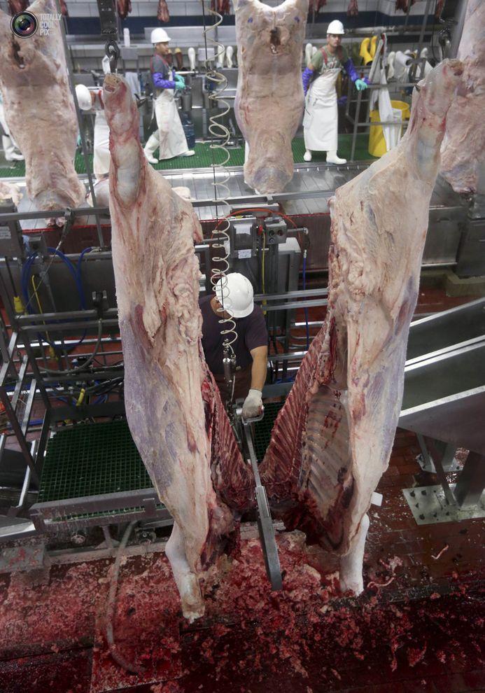 MakeMeat39 Как делают мясо, которое мы едим