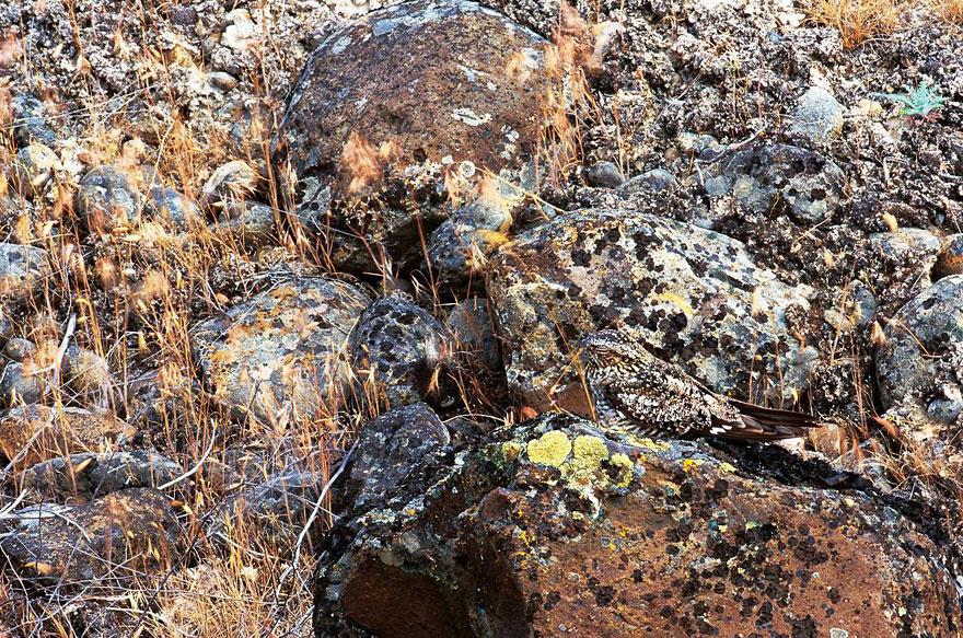 VanishingAct04 А вы видите животных на фотографиях?