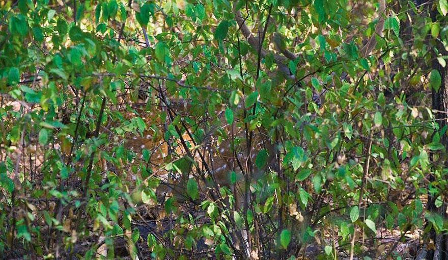 VanishingAct07 А вы видите животных на фотографиях?