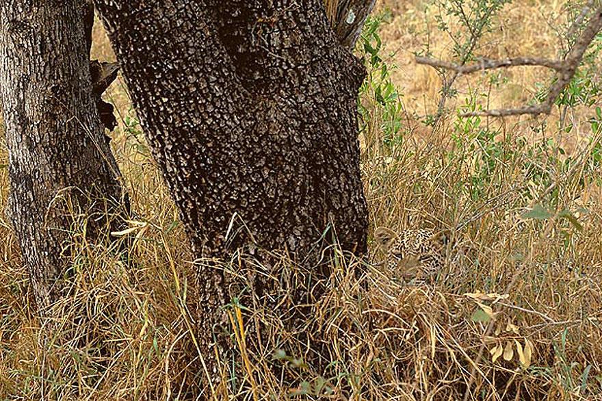VanishingAct15 А вы видите животных на фотографиях?