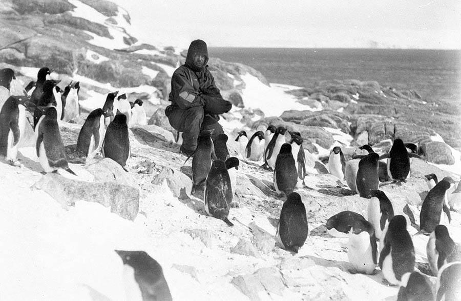 antarctica09 Самые впечатляющие фотографии Антарктиды начала 20 века