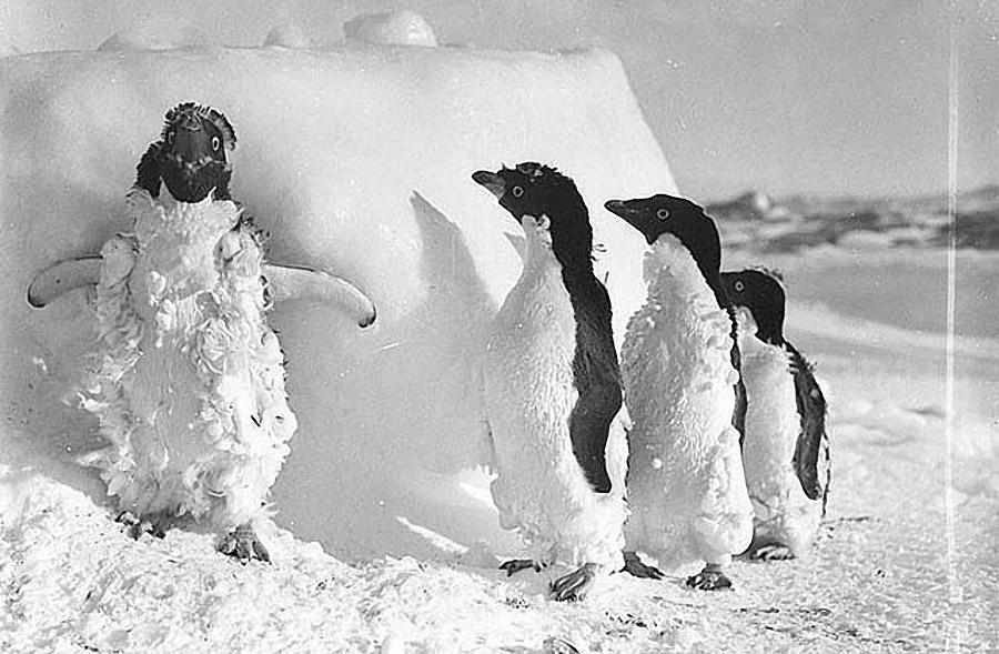 antarctica11 Самые впечатляющие фотографии Антарктиды начала 20 века