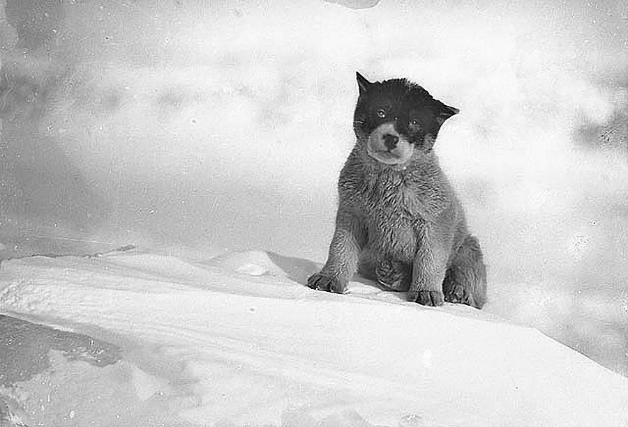 antarctica15 Самые впечатляющие фотографии Антарктиды начала 20 века