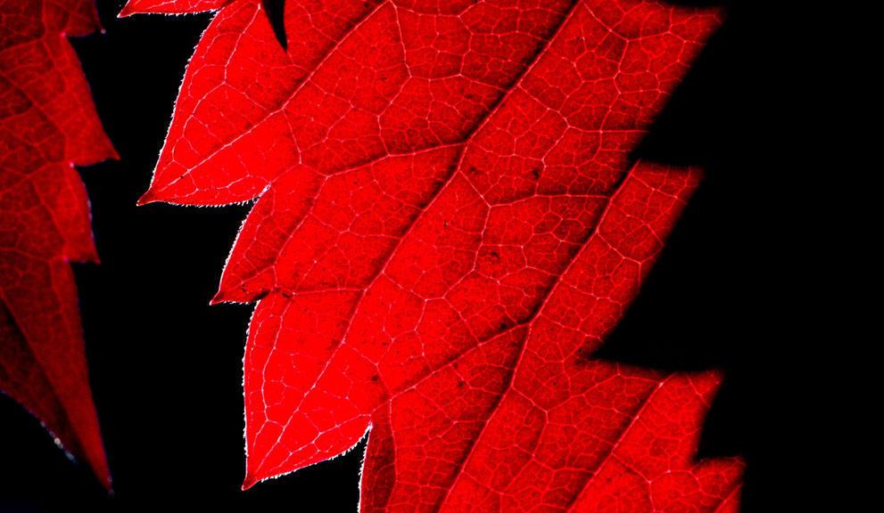 autumn03 В воздухе витает осень