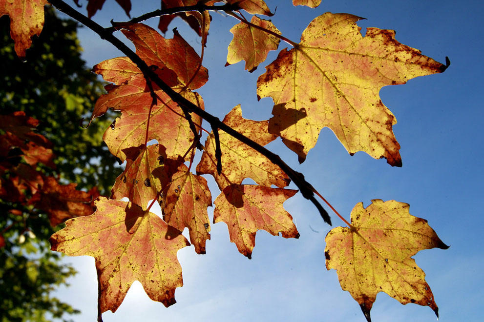 autumn20 В воздухе витает осень