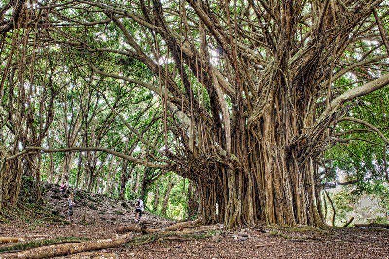 autobiography of banyantree On this page you can read or download autobiography of banyan tree in pdf format.