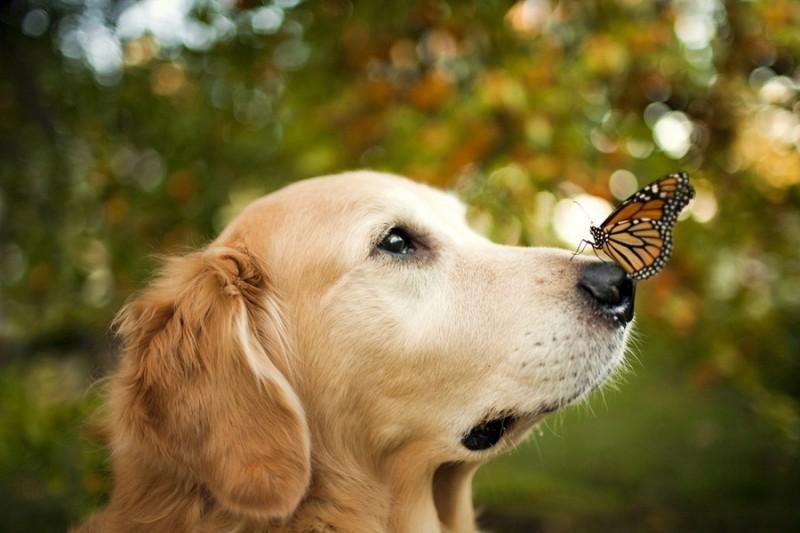 16 cамых забавных осенних фотографий собачек