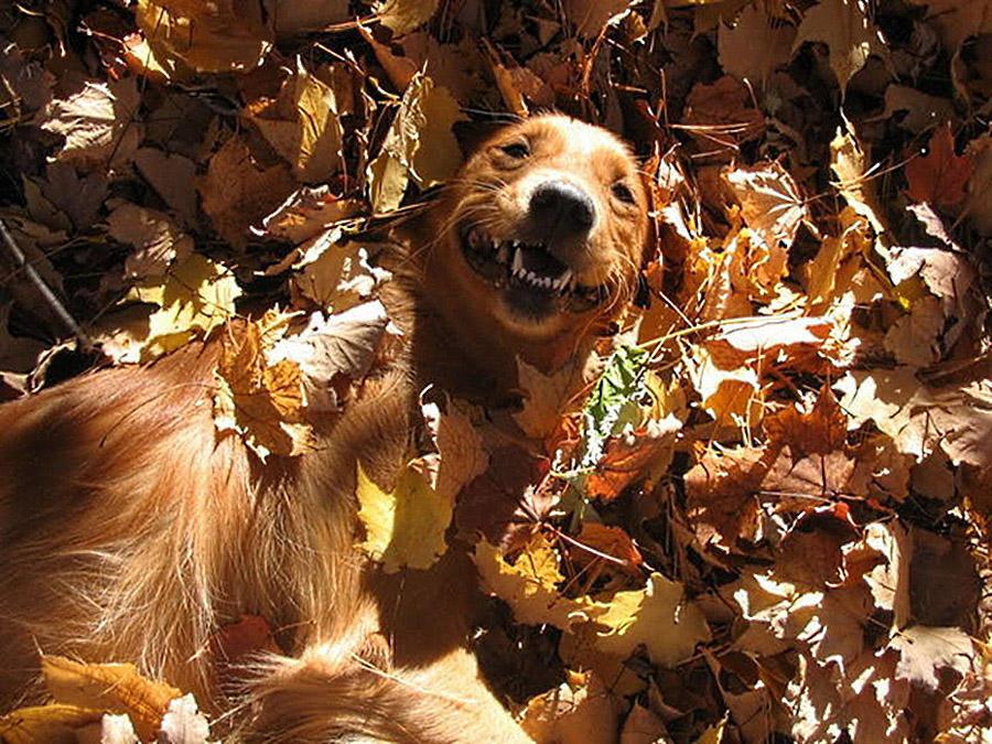 Забавные осенние фотографии собачек