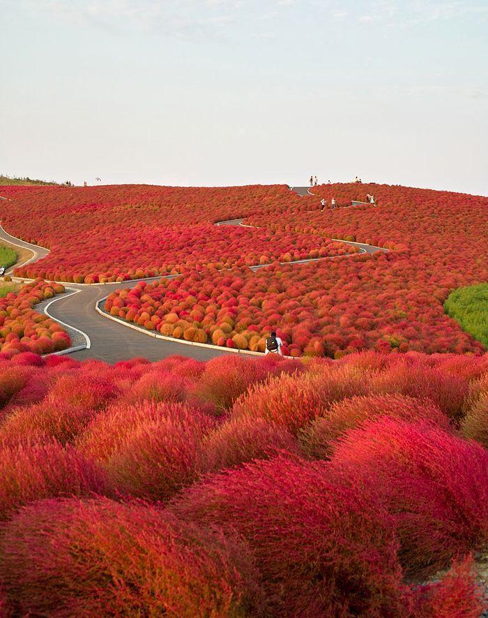 fall03 2 Краски осени
