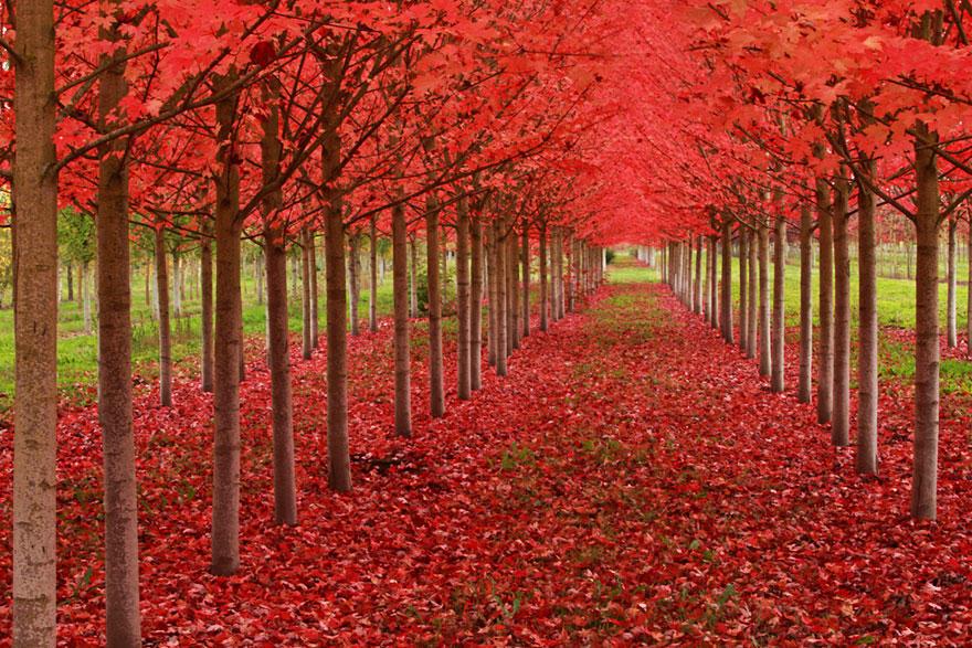 fall071 Краски осени