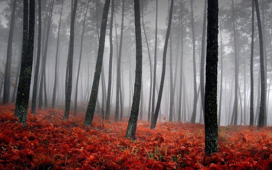 fall101 Краски осени