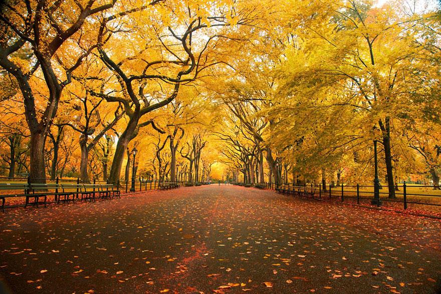 fall11 Краски осени