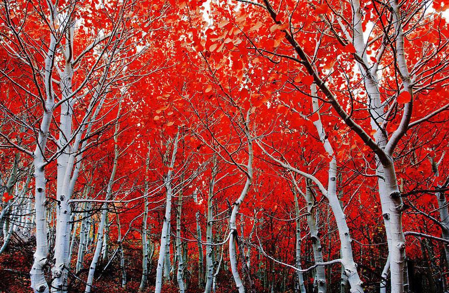 fall12 Краски осени