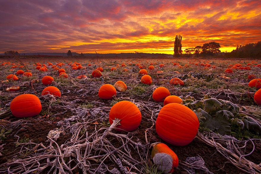 fall13 Краски осени