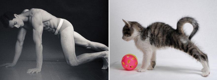 mencats18 Котики и парни