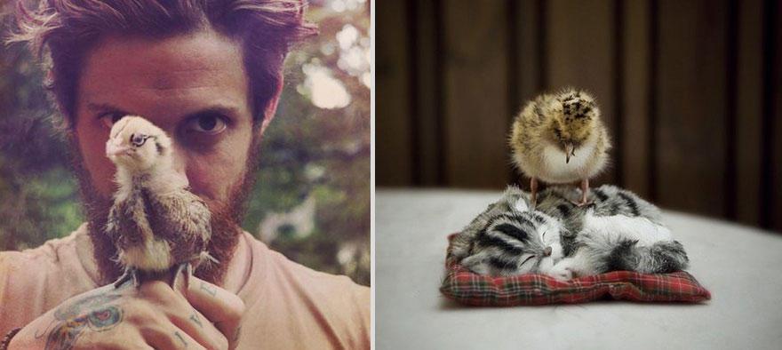 mencats22 Котики и парни
