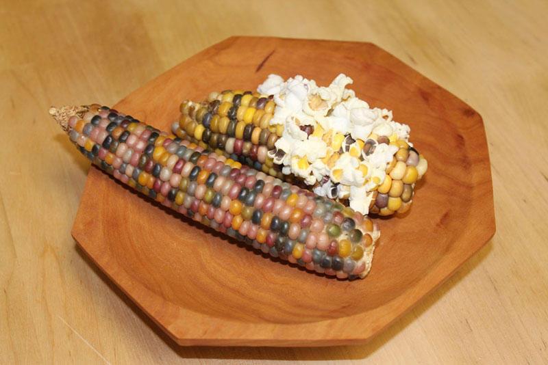 rainbowcorn06 Самая необычная кукуруза в мире