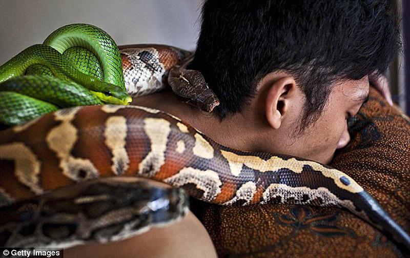 snakemassage01 Змеиный массаж