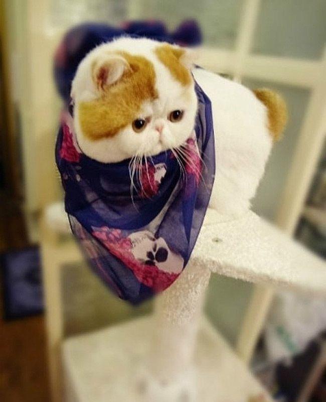 snoopy22 Кот Снупи бейб и его гардероб