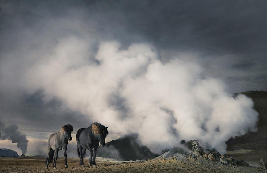 338188 Грация прекрасных лошадей в фотопроекте Equus