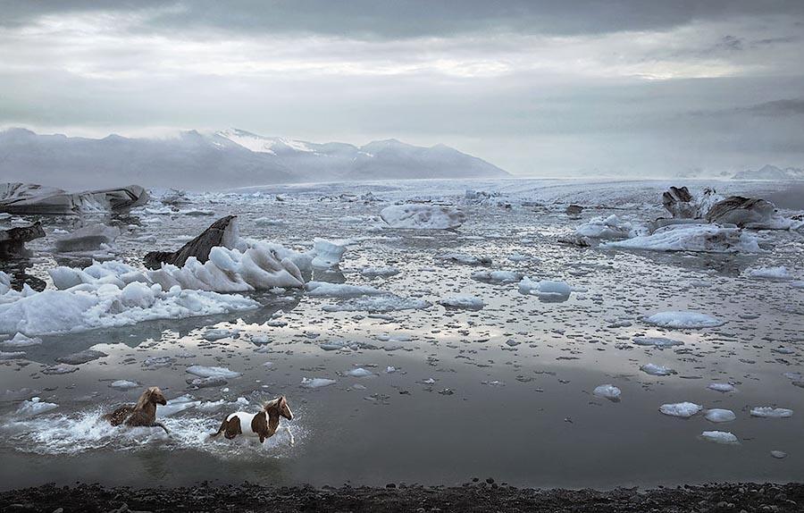 338189 Грация прекрасных лошадей в фотопроекте Equus