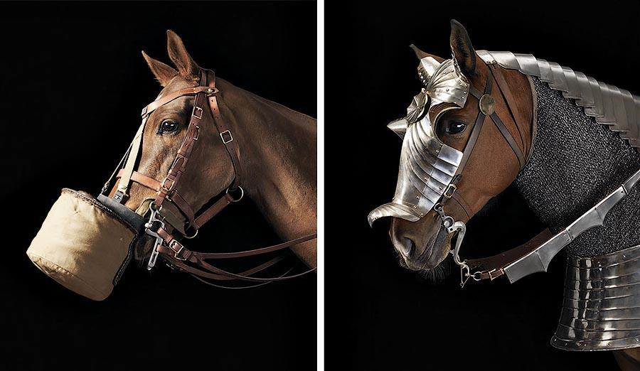 338194 Грация прекрасных лошадей в фотопроекте Equus