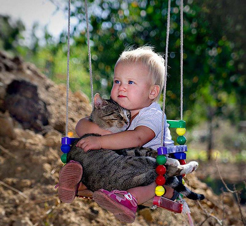 BIGPIC11 Преданные кошки с золотым сердцем