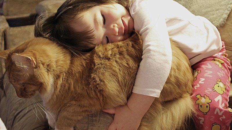 CatsGoldenHearts01 Преданные кошки с золотым сердцем