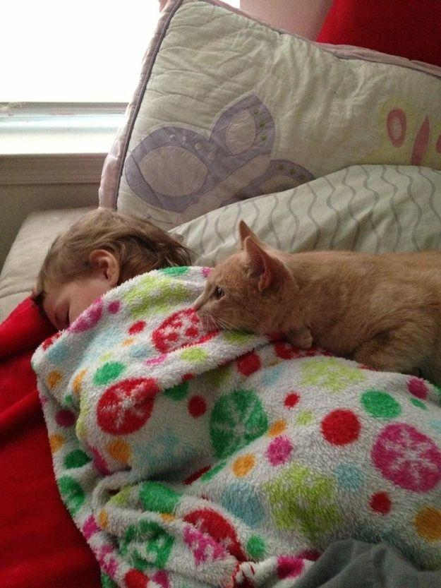 CatsGoldenHearts03 Преданные кошки с золотым сердцем