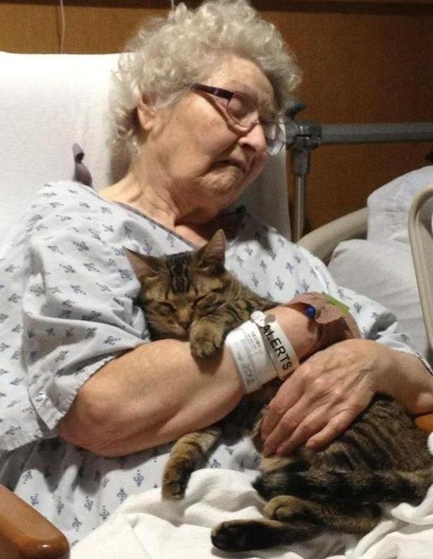 CatsGoldenHearts04 Преданные кошки с золотым сердцем