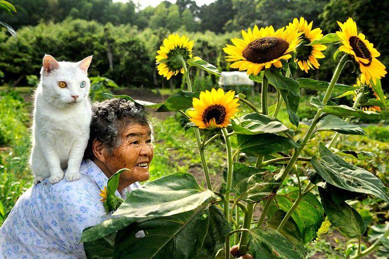 CatsGoldenHearts05 Преданные кошки с золотым сердцем