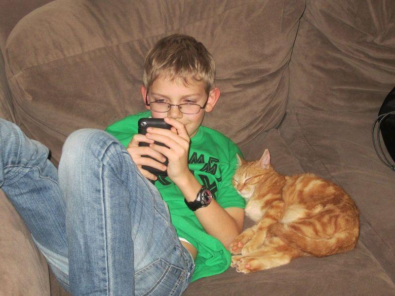 CatsGoldenHearts06 Преданные кошки с золотым сердцем