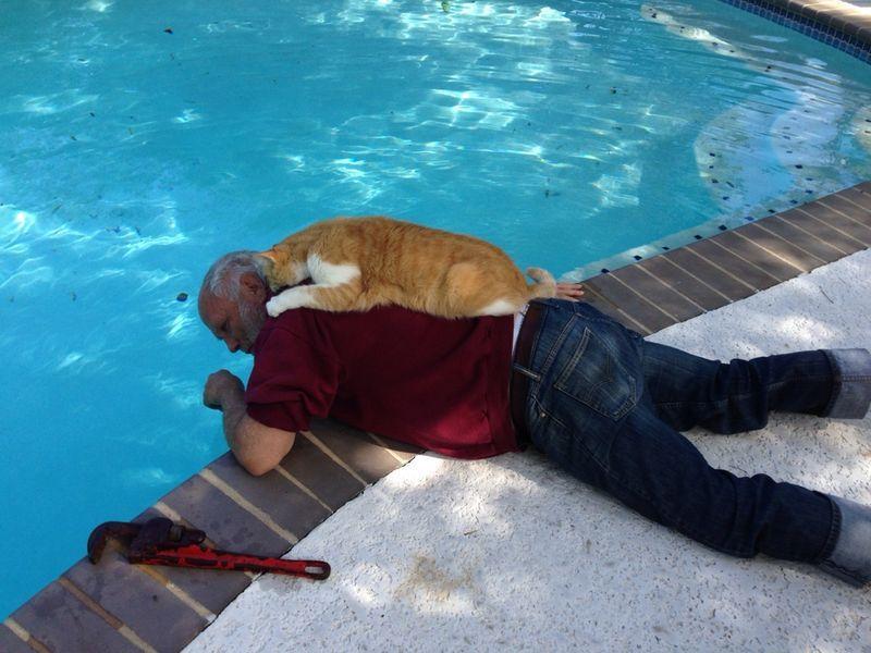 CatsGoldenHearts08 Преданные кошки с золотым сердцем