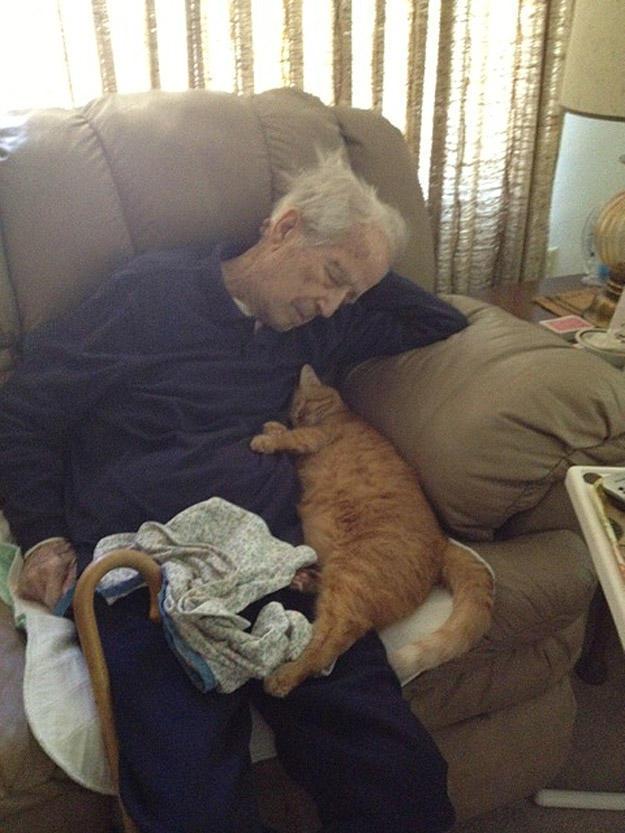 CatsGoldenHearts10 Преданные кошки с золотым сердцем