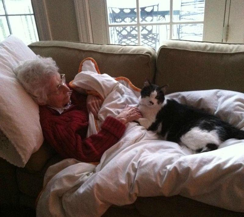 CatsGoldenHearts11 Преданные кошки с золотым сердцем