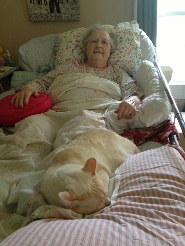 CatsGoldenHearts13 Преданные кошки с золотым сердцем
