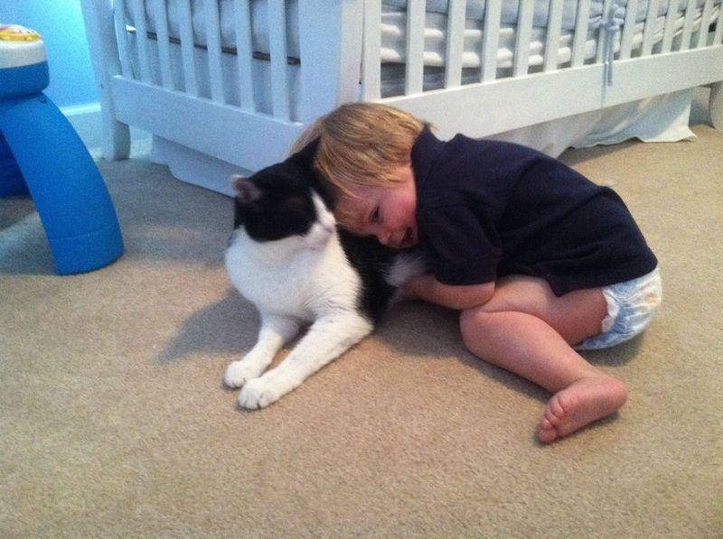 CatsGoldenHearts14 Преданные кошки с золотым сердцем