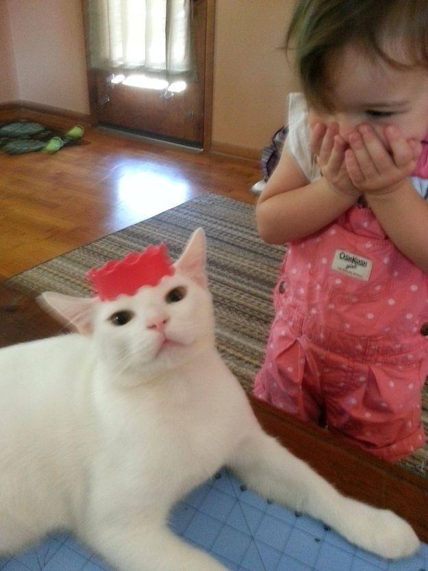 CatsGoldenHearts15 Преданные кошки с золотым сердцем