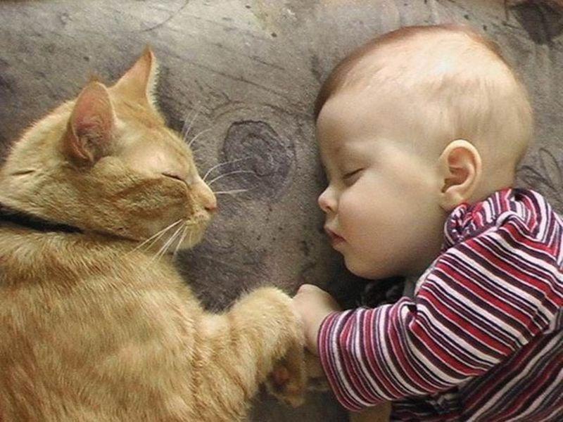 CatsGoldenHearts16 Преданные кошки с золотым сердцем