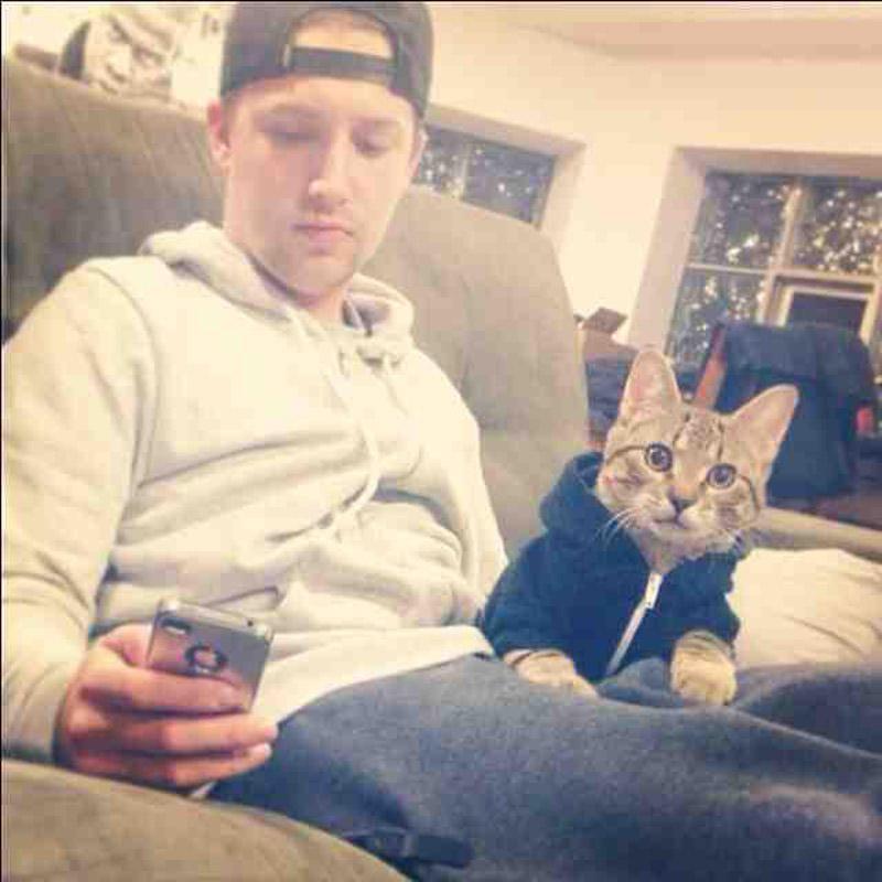 CatsGoldenHearts17 Преданные кошки с золотым сердцем